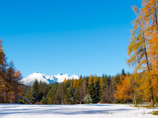 Tirolsplitter | Lärchen im Nebel