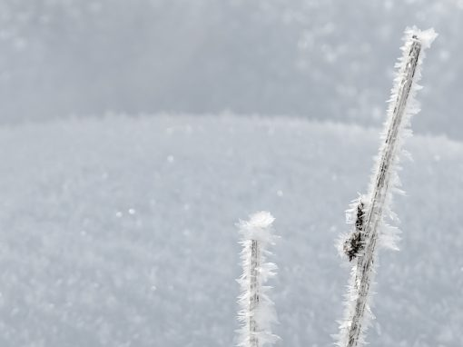 Tirol Splitter | See-Eck Nassereith