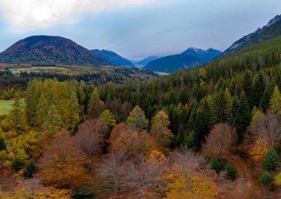Tirol Splitter | Herbstwald oberhalb von Aschland
