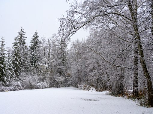Novemberschnee in Nassereith